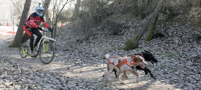 Mañana de mushing en Arroyo